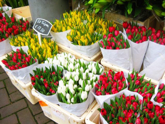 「オランダの花屋で見かけたたくさんのチューリップ」のフリー写真素材を無料ダウンロード