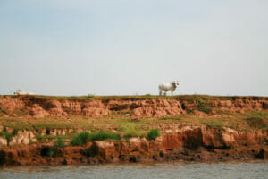 Free stock photos of [Cow on the other side of the river]