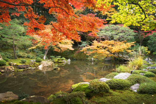 Free stock photos of [Beautiful autumn leaves and Japanese garden in Nanzenji, Kyoto]