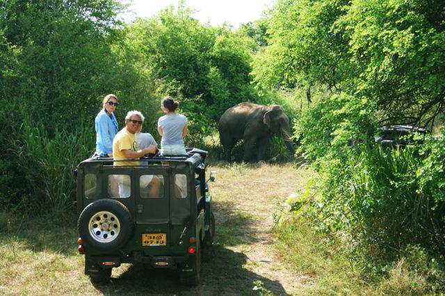 Free stock photos of [Dambulla Jeep Safari Tour]